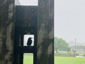 ひと休みする鳥1