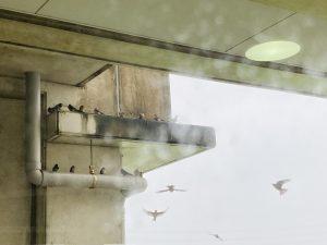 雨宿りの鳥たち1