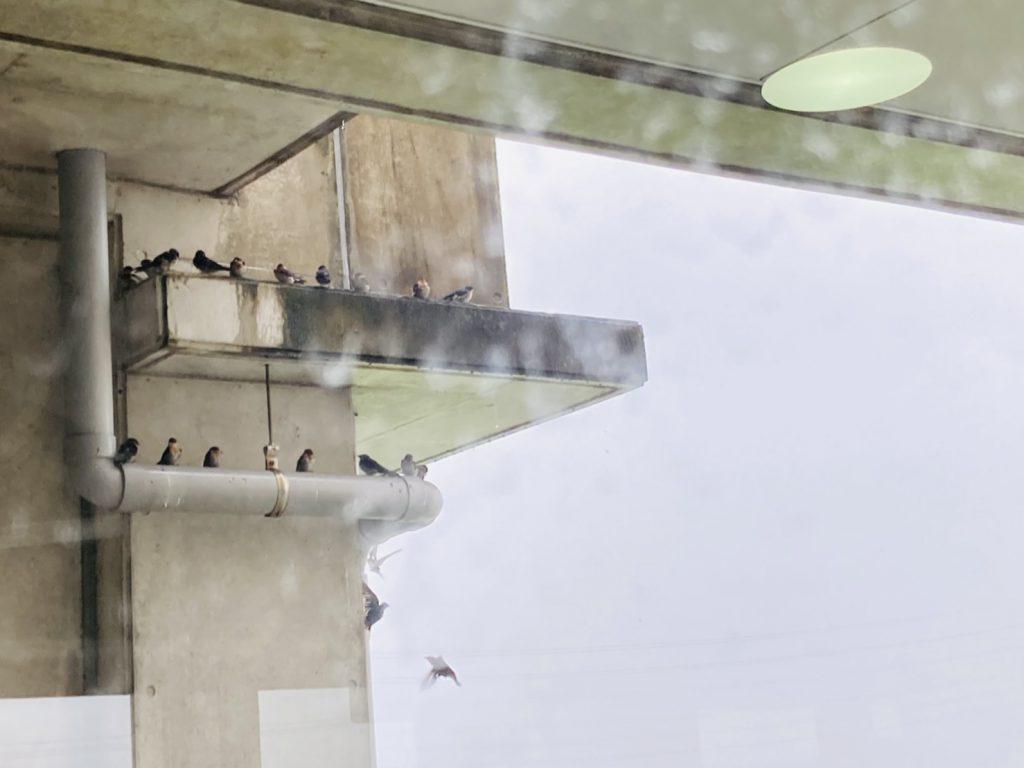 雨宿りの鳥たち2