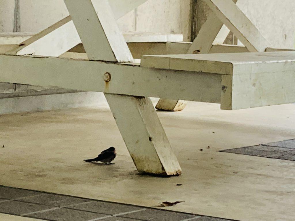 雨宿りの鳥2